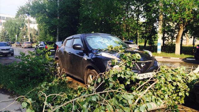 На машину упало дерево: что делать, судебная практика