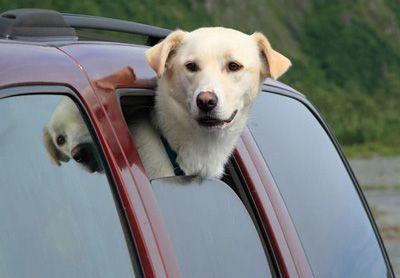 Перевозка собаки в машине: правила, клетка, чехол
