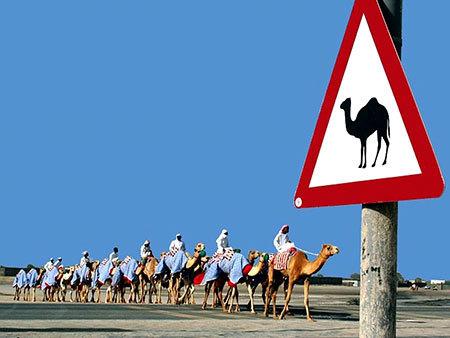 Интересные факты о ПДД в разных странах, смешные дорожные знаки